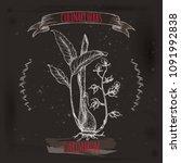 cardamom aka elettaria...   Shutterstock .eps vector #1091992838