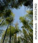 Arashiyama Bamboo Grove Blue...