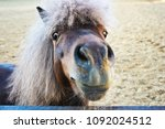 pony looks with curiosity | Shutterstock . vector #1092024512