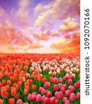beautiful colorful tulip fields ... | Shutterstock . vector #1092070166