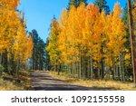 Autumn In The White Mountains...