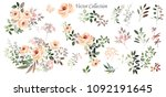 vector drawing. botanical... | Shutterstock .eps vector #1092191645