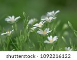 flower for postcard background | Shutterstock . vector #1092216122