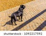 staffordshire bull terrier dog... | Shutterstock . vector #1092217592