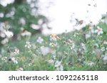 white flowers forest grass... | Shutterstock . vector #1092265118