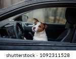 Stock photo small dog in the car the jack russell terrier is traveling in the fog in the forest 1092311528