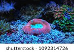 lps coral in saltwater reef... | Shutterstock . vector #1092314726