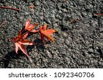 red maple on the road  autumn... | Shutterstock . vector #1092340706