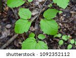 detail of the bright green... | Shutterstock . vector #1092352112