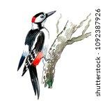 watercolor woodpecker on a tree | Shutterstock . vector #1092387926