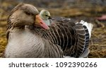 Mother Goose And Cute Little...