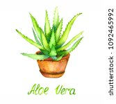 aloe vera plant in brown pot ... | Shutterstock . vector #1092465992