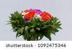 bouquet of flowers isolated on... | Shutterstock . vector #1092475346