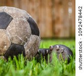 Small photo of Old ball to play football, details of the sport on the grass