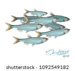 sprat sketch vector fish icon.... | Shutterstock .eps vector #1092549182