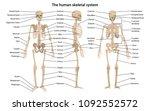 human skeleton in front ... | Shutterstock .eps vector #1092552572