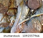 pile of firewood. preparation... | Shutterstock . vector #1092557966