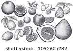 isolated citrus fruit set.... | Shutterstock .eps vector #1092605282