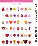 tulip varieties flat icon set.... | Shutterstock .eps vector #1092636485