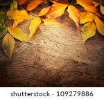 Autumn Forest Background. Fall...