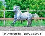 the meradas stallion   Shutterstock . vector #1092831935