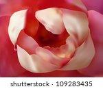 beautiful pink rose close up ... | Shutterstock .eps vector #109283435