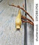 Small photo of yellow banana slug on wood deck near redwood frond