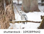 grey heron  ardea cinerea | Shutterstock . vector #1092899642