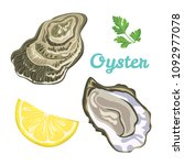 oyster isolated on white... | Shutterstock .eps vector #1092977078