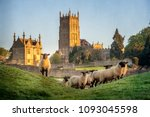 cotswold sheep near chipping... | Shutterstock . vector #1093045598