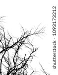 branch silhouette on a white... | Shutterstock . vector #1093173212