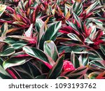 colorful flowers in the summer  ... | Shutterstock . vector #1093193762