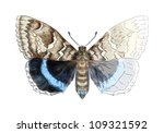 butterfly heliconius.... | Shutterstock . vector #109321592