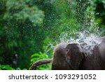 Phuket Thailand Elephant ...