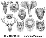 Stock vector animal head collection illustration drawing engraving ink line art vector 1093292222