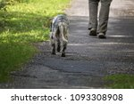 walking man's feet and hunting...   Shutterstock . vector #1093308908