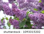 outdoor image of beautiful... | Shutterstock . vector #1093315202