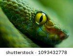 close up view of a dangerous... | Shutterstock . vector #1093432778