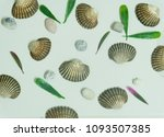 shells on a white background | Shutterstock . vector #1093507385