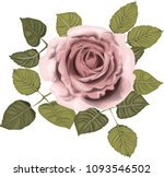 pink roses _ stylized vector... | Shutterstock .eps vector #1093546502