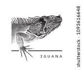 vector graphic image of iguana. ...   Shutterstock .eps vector #1093616648