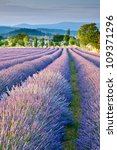 lavender field in provence | Shutterstock . vector #109371296
