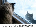 two cats in a stare off at a... | Shutterstock . vector #1093714052