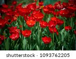 a group of beautiful decorative ... | Shutterstock . vector #1093762205