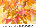 colorful autumn leaves blur...   Shutterstock . vector #1093854935