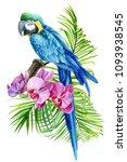 tropical bird  parrot  and... | Shutterstock . vector #1093938545