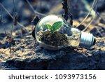 plant growing inside lamp bulb... | Shutterstock . vector #1093973156