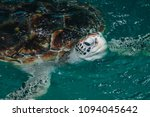 sea turtle conservation center... | Shutterstock . vector #1094045642