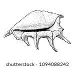 handdrawn sketch of a seashell... | Shutterstock .eps vector #1094088242