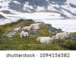 sheeps in the mountains    | Shutterstock . vector #1094156582